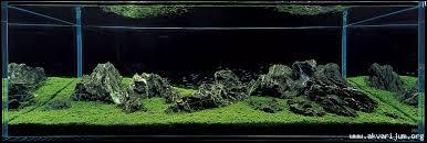 Aquascape Inspiration Inspirational Iwagumi Aquascapes Uk Aquatic Plant Society
