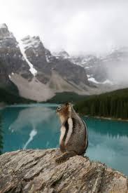 best 25 canadian wildlife ideas on pinterest