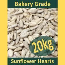 sunflower bird seed ebay