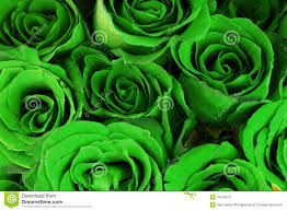green roses green roses bouquet as background stock photo image 43530572