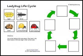 ladybug life cycle printables u0026 activities