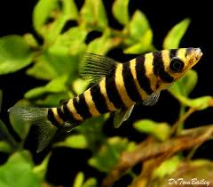 south american tropical fish for sale