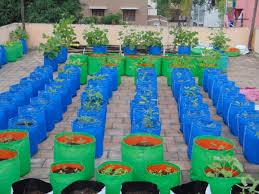 terrace gardening grow bags grow bags chennai tamil nadu