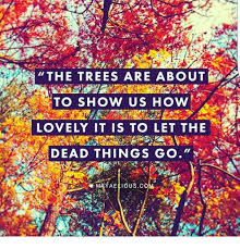 the trees are about to show us how lovely it is to let the dead