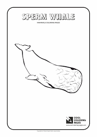 whale coloring page cool coloring pages