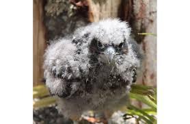 nz native plants list new zealand falcon kārearea new zealand native land birds