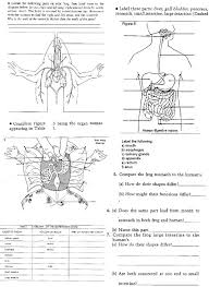 frog dissection worksheet 28 templates frog dissection