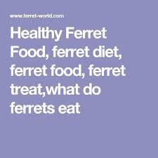 best 25 ferret diet ideas on pinterest raw dog food what do