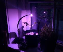 Solar Plant Lights by Solar Charge Your Led Grow Lights 3 Steps
