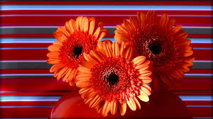 flickr friday orange decorations a gallery on flickr