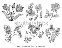 set 6 decorative flowers design stock vector 206155666