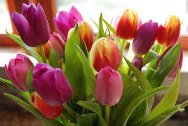 all flower names list fenicia all kinds of flowers asiatic