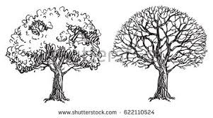 tree without leaves stock images royalty free images vectors