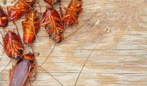 how to get rid of roaches in your home naturally 12 unique ways