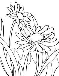 spring flower daisy coloring spring flower daisy coloring