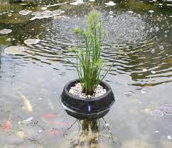 laguna floating plant basket medium 35 cm 10 from laguna ponds