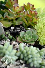 succelents how to plant succulents beautifully stonegable