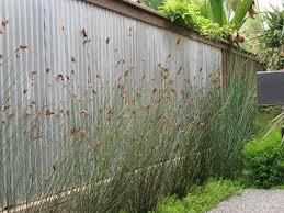 san diego corrugated metal backsplash landscape contemporary with