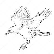 drawn hawk crow pencil and in color drawn hawk crow