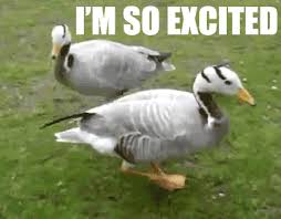 Im So Excited Meme - i m so excited reaction gifs
