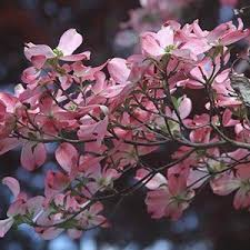 12 Best Plants That Can by 10 Most Useful Plants That Can Be Found In The Wild Kickassfacts Com