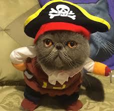 Halloween Pet Costume Halloween Pet Costume Ifamcare