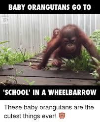 Baby Monkey Meme - baby monkey meme 28 images most adorable baby animals pregnant