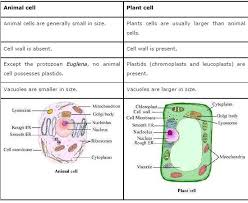 osmosis in plant and animal cells worksheet answers ghost study