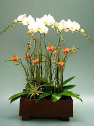 orchid arrangements images about orchid arrangements on orchids and