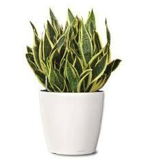 Indoor House Plants Low Light 41 Best House Plants Images On Pinterest Indoor Plants Indoor