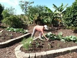 florida garden design u2013 sdgtracker