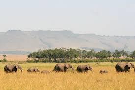 safari kenya hide away safari peaks of africa