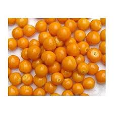 Patio And Things by Amazon Com Seeds And Things Poha Berry 25 Seeds A Popular