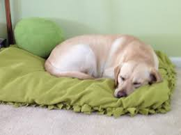 Medium Sized Dog Beds 15 No Sew Diy Pet Beds For Your Best Friend
