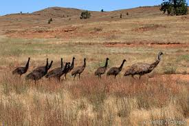 Rugged Landscape The Rugged Landscape Of Ikara Flinders Ranges National Park