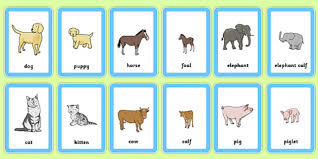 animals and their babies worksheets the best and most
