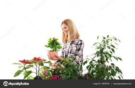Beautiful House Plants by Female Florist With Beautiful House Plants U2014 Stock Photo