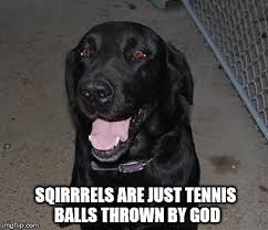 Black Lab Meme - black lab meme generator lab best of the funny meme
