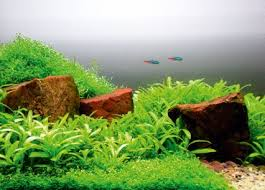 Aquascape Design Layout How To Aquascape Small Tanks U2014 Practical Fishkeeping Magazine