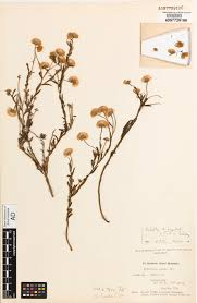 native plants south australia 5 of the oldest plant specimens in sa good living