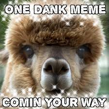 Alpaca Memes - one alpaca meme coming your way by xxfluffywolfgirlxx on deviantart
