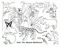 free coloring page of the rainforest free printable rainforest coloring pages coloring home