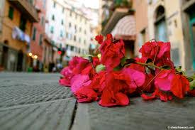 flower petals line the streets in cinque terre u0027s riomaggiore