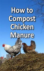 how to compost chicken manure backyard poultry mag