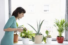 Best Indoor Plants For Oxygen by Natural Ways To Add Oxygen To The Air In Your Home Livestrong Com