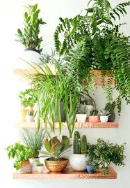 decor plants home decor plants home best house ideas on indoor and plant india with