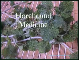 where to buy horehound candy horehound medicine studio botanica