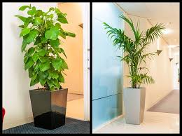 Plants For Office Indoor Plants Maintenance Best Indoor Plants For Office Indoor