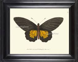 Butterfly Office Decor Large Butterfly Art Etsy