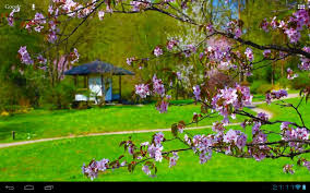 zen garden house sakura android apps on google play